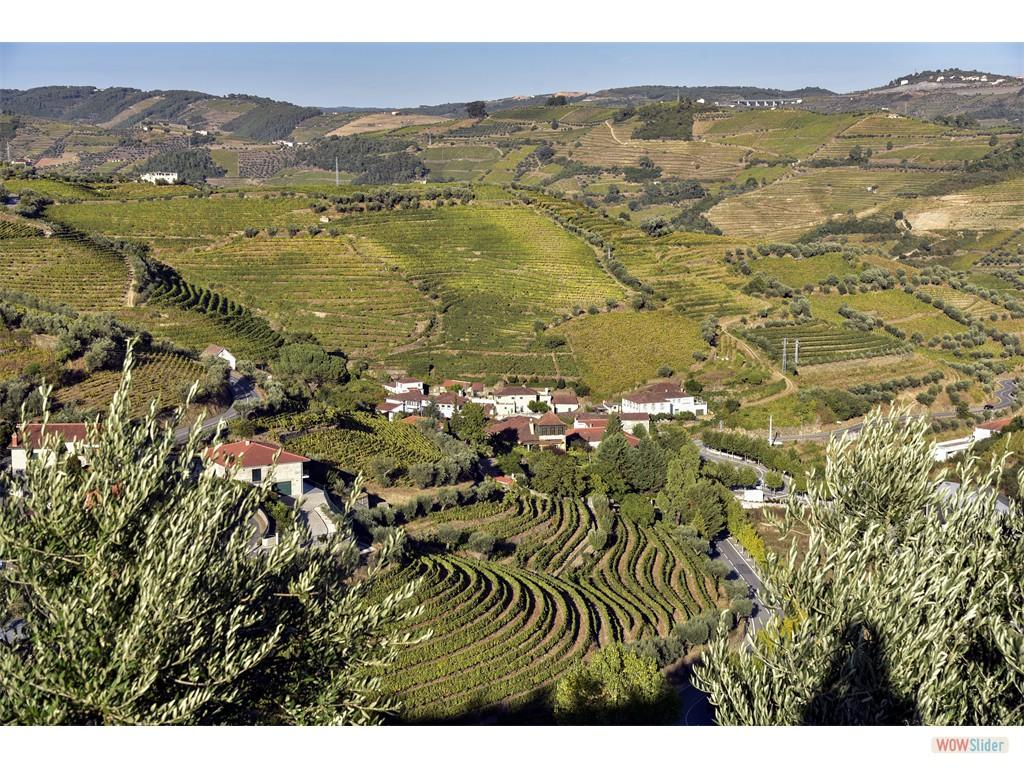 Vignobles du Douro - Octobre 2016
